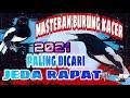 Masteran Kacer Masteran Burung Kacer Paling Dicari Jeda Rapat  Mp3 - Mp4 Download