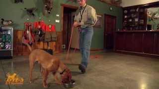 D.t. The Dog Training Video 6 | Food Bowl Casting