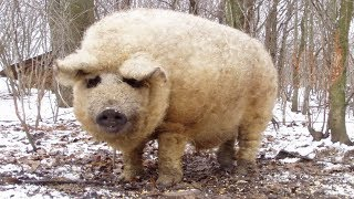 Shocking Animal Hybrids You Won't Believe Exist (WEIRD)!