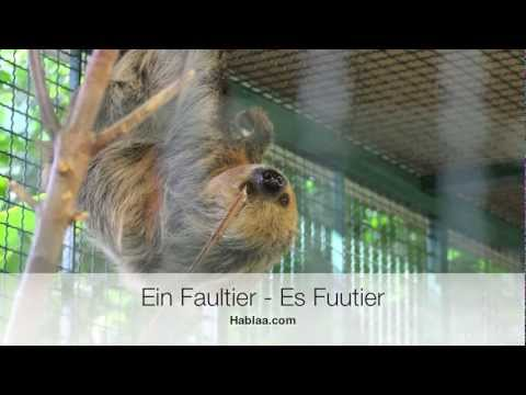 Schweizerdeutsch für Anfänger (Schwiizerdütsch) Tiere