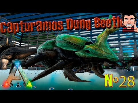 Ark Survival Evolved Capturamos Dung Beetle gameplay español el escarabajo mas complicado de ark!