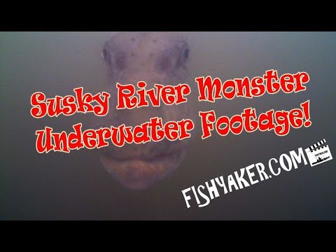 Huge Susquehanna River Underwater Northern Pike Video Footage - Fishyaker