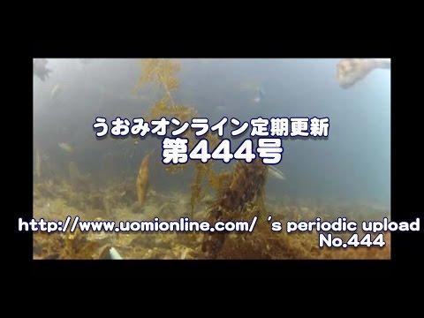 アナハゼのロケットスタート水中動画の定期更新No444
