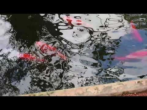 Colourful fish @AVANI Bentota Resort & Spa, Bentota, Sri Lanka