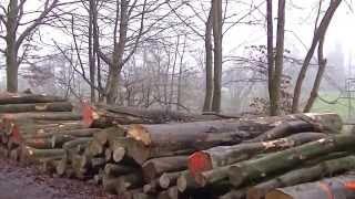 видео Мебельный щит – продукт леса