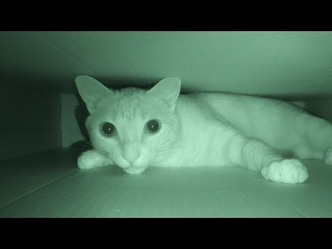 Are Your Cats Most Active At Night?