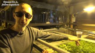 Аквапоника. Гидропоника. Выращивание зелени дома. Овощи и фрукты - селекция.Фролова Ю. А.