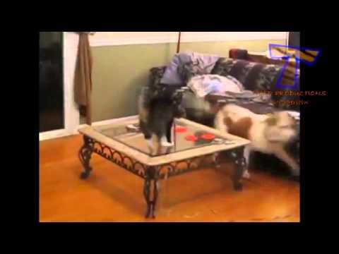 Как собаки и кошки дружат между собой - YouTube