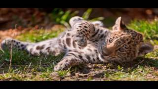 ягуар животное часть  5