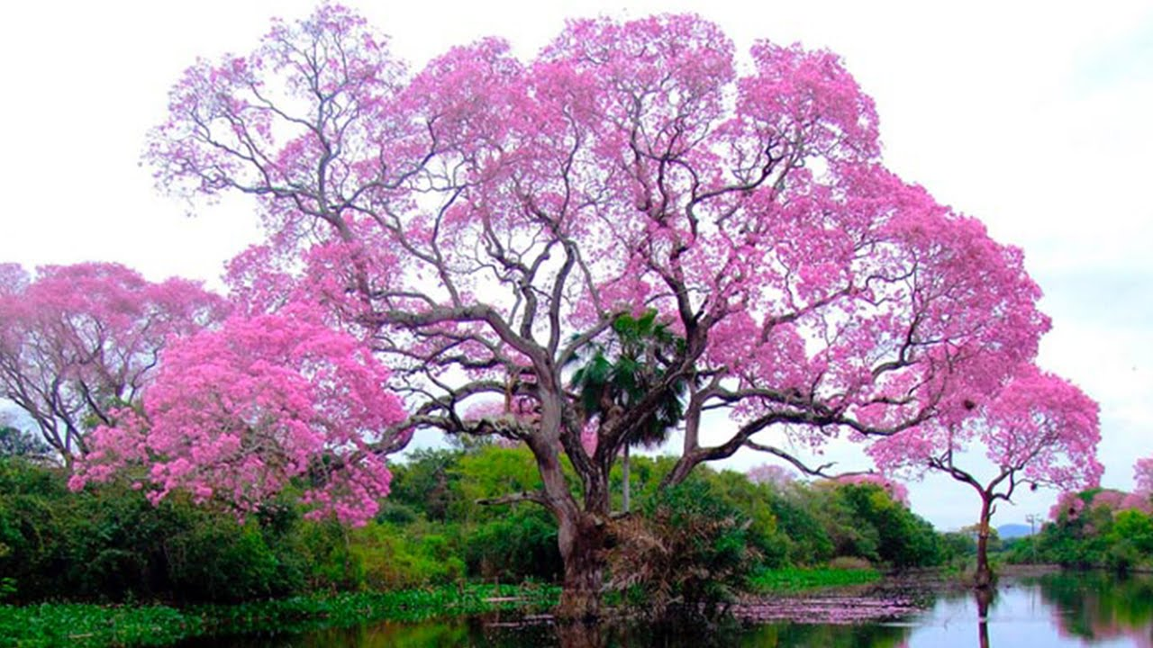 10 Stunning Trees In The World Youtube
