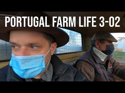 HOW we MAKE Organic OLIVE OIL | PORTUGAL FARM LIFE S3-02 ❤