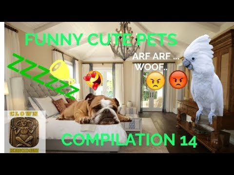 FUNNY CUTE PETS VIDEO COMPILATION 14 | CK#26