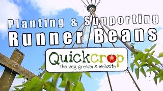 Planting & Supporting Runner Beans