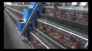 a type chicken cage feeding machine.wmv