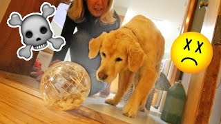 DOG vs NEW HAMSTER!!! (OH SH*T)