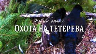 Осенняя охота на тетерева видео