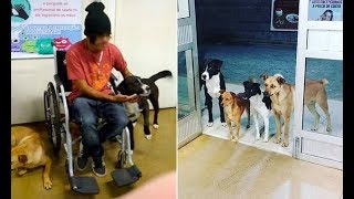 This Homeless Man Admitted To Hospital, His Stray Dog Friends Wait For Him At The Door