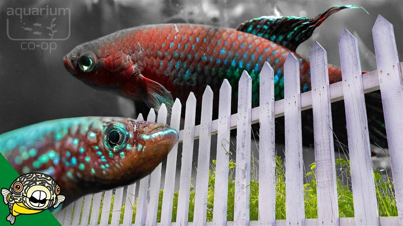 indoor-and-outdoor-fish-room-tour