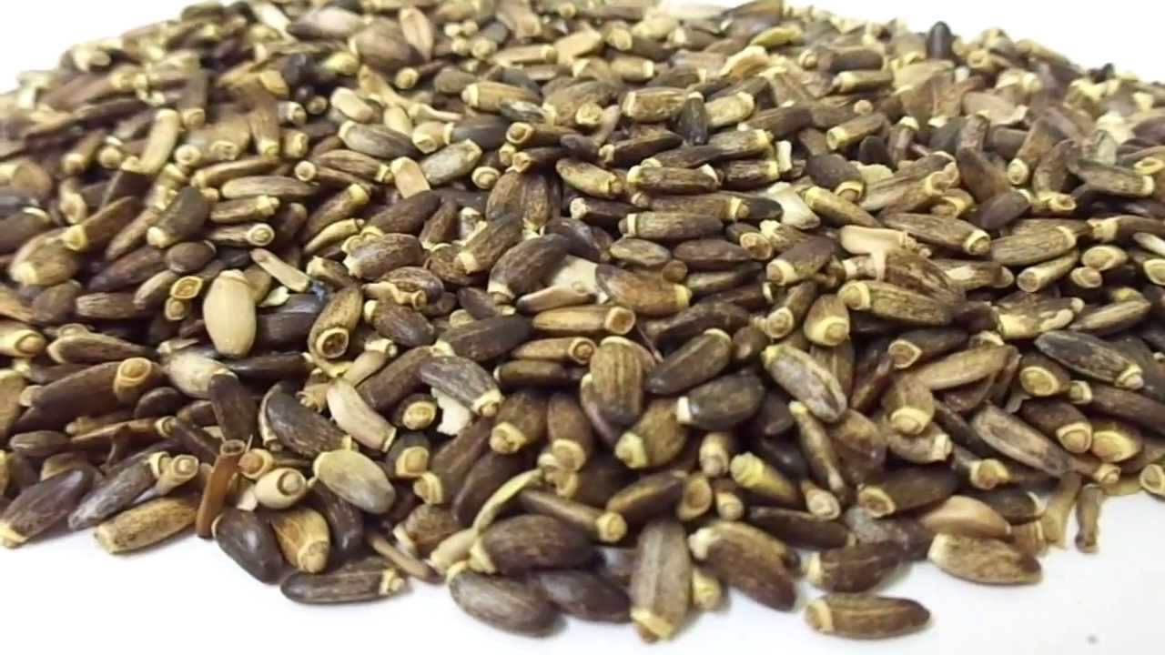 What is thistle seed