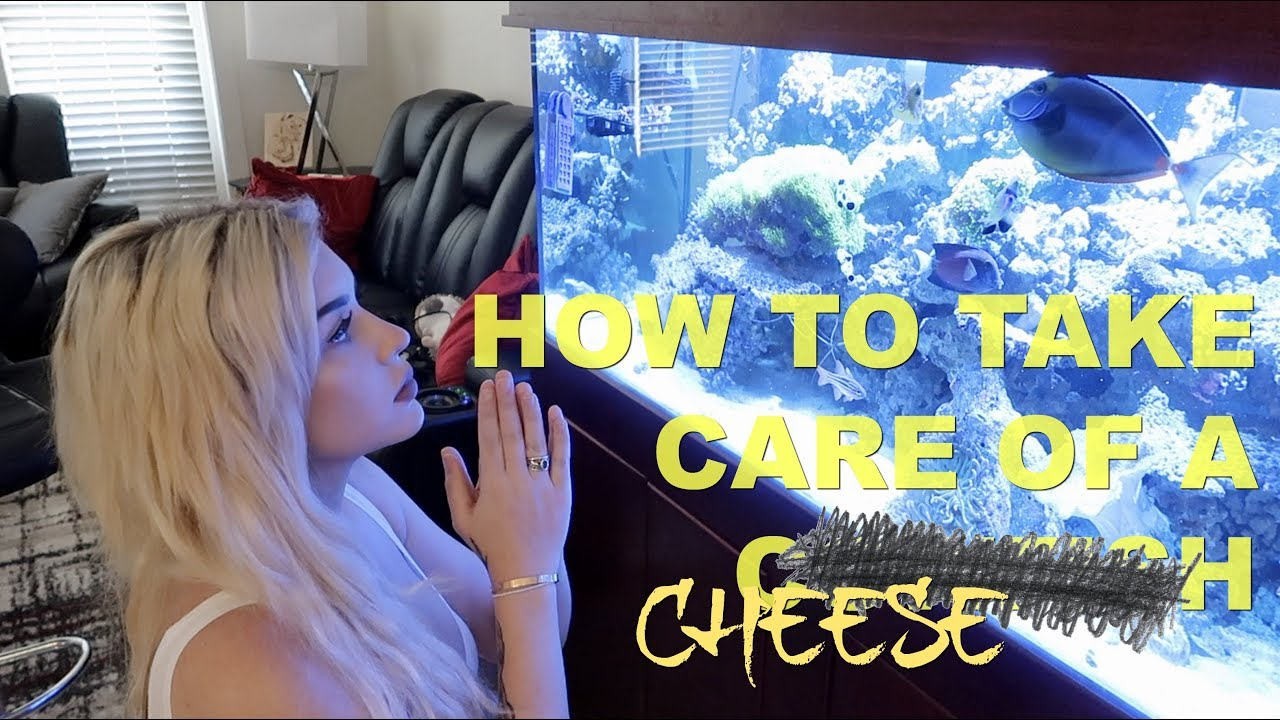 how-to-take-care-of-a-cowfish-featuring-my-fish-cheese