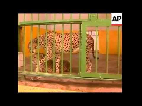 Aid reaches Baghdad zoo