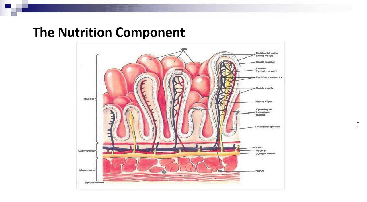 The Lymphatic And Immune System Youtube