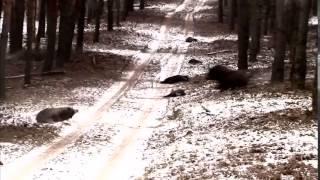 Охота на кабана  подборка 2 YouTube