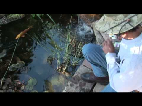 Pond Water Quality Test