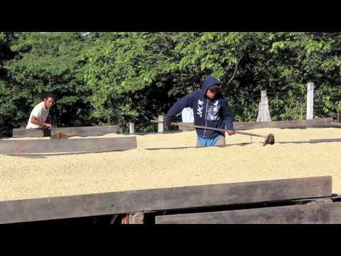 Project Origin - El Salvador (Ona Coffee)