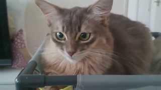 キャットプレイセンターで、まったりする猫たち ブログ『ブルー・シュシ...
