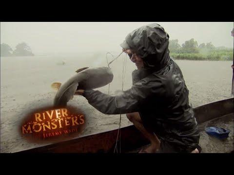Catching Kamba Catfish Without A Rod   CATFISH   River Monsters
