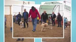 First Annual Ndwcc Dog Training & Bbq