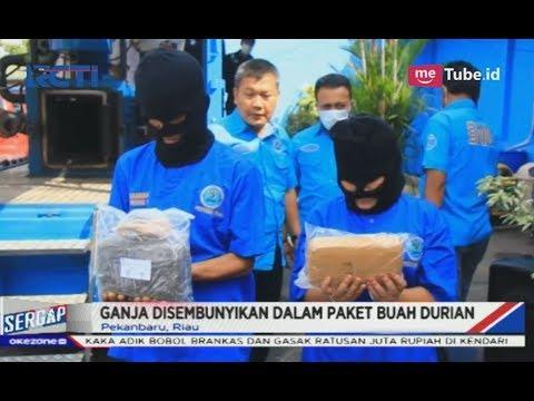 Kepergok Ambil Paket Ganja Berkedok Buah Durian, Pasutri Ditangkap BNN Riau - Sergap 01/03