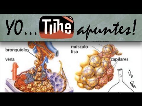 Fisiología del sistema respiratorio. Introducción.