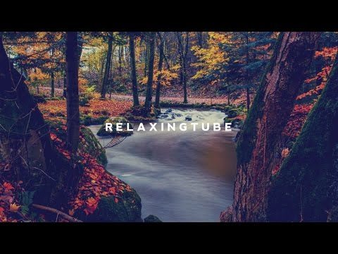 Japanese traditional relaxing music | Koto, Zen Garden, Instrumental, Spa – Nº 003
