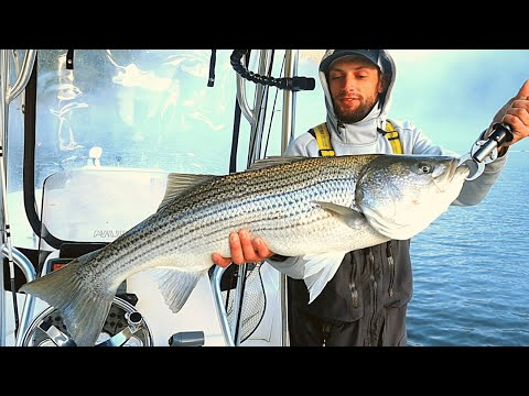 Big Striped Bass (Backwoods Fishing Guide)