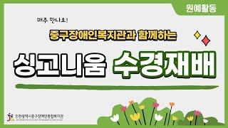 [인천중구장애인복지관] 원예활동-싱고니움 수경재배