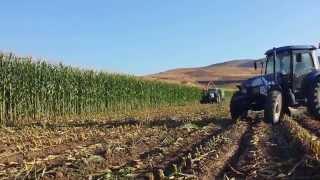 Newholland ile mısır sılajı hasadı t6040 td 90