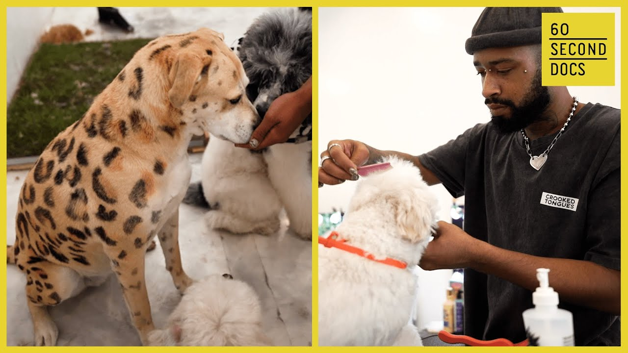 The Art of Dog Grooming | Dogue Spa
