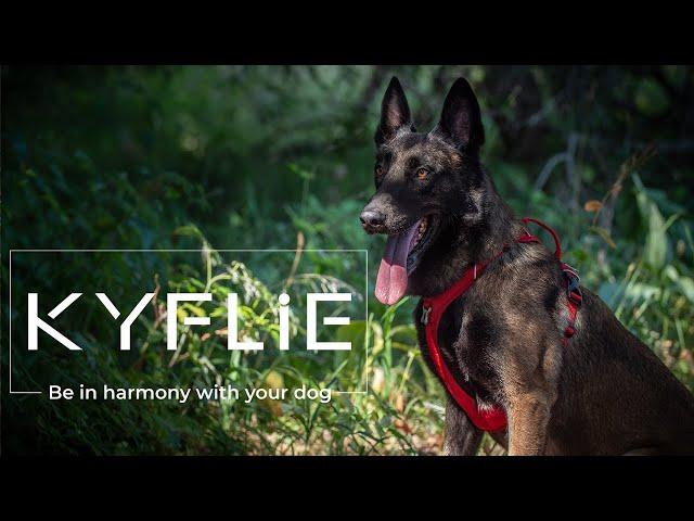 Kyflie - Harnais et accessoires pour chiens