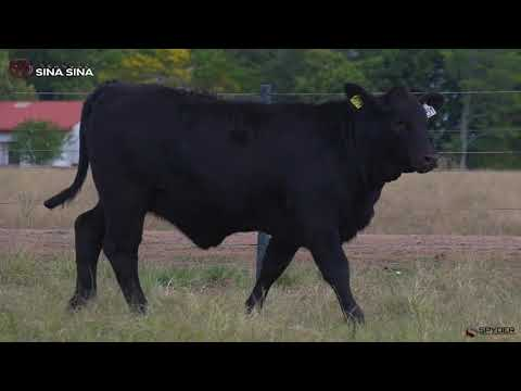 LOTE 151