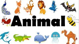 Học Tiếng Anh Chủ Đề Các Loài Động Vật/Animals/English Online