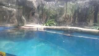 pinguin area gembiraloka zoo