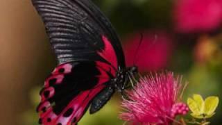Mariposa Traicionera-Mana  con letra