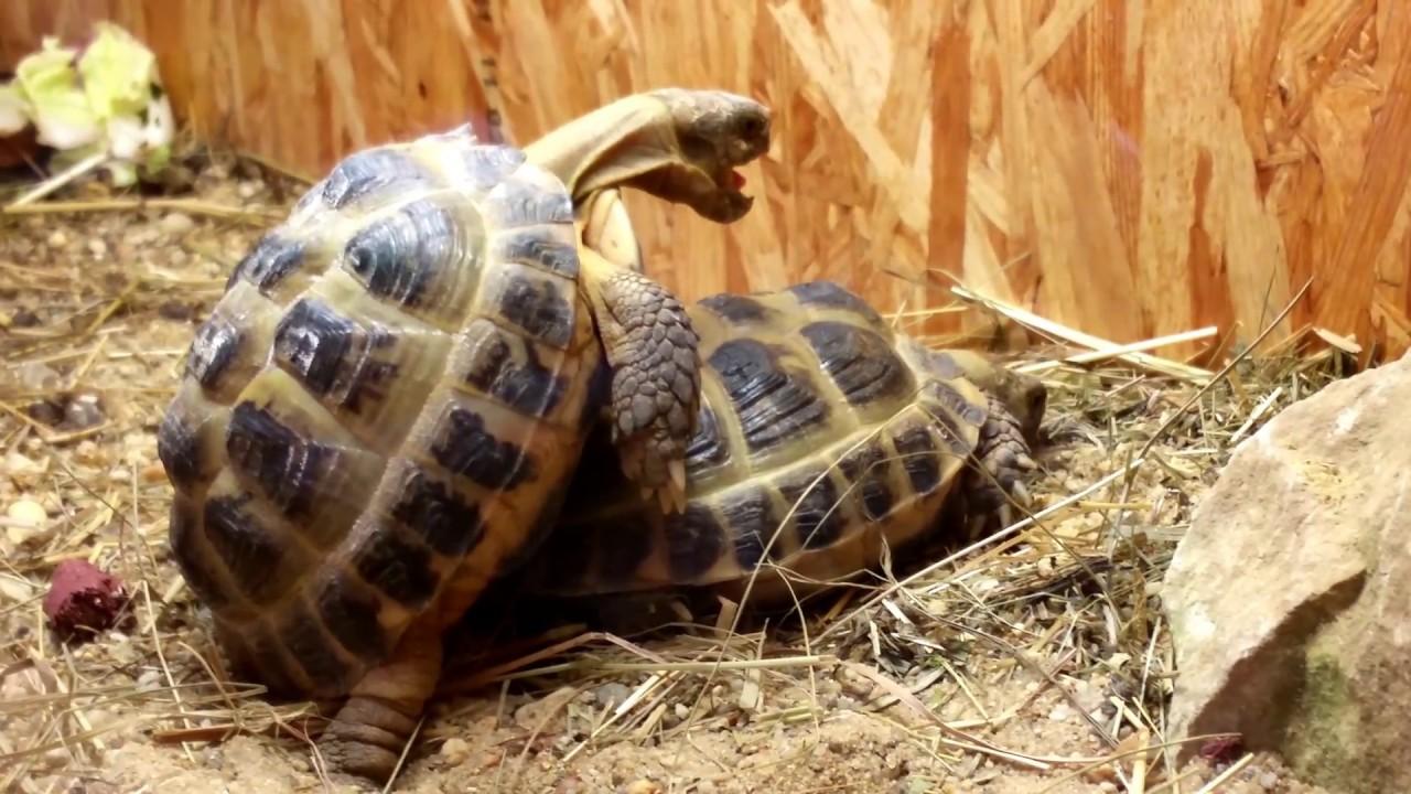Schiltkröten