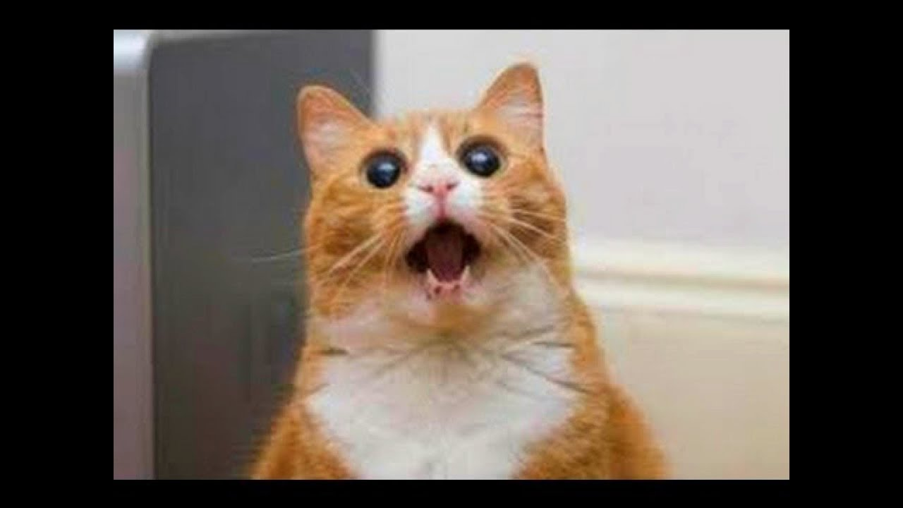 Lustige Katzenvideos Youtube