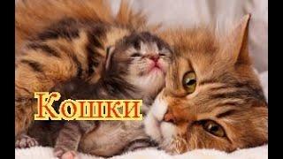 Видео про кошек. Позитив. Создай себе хорошее настроение