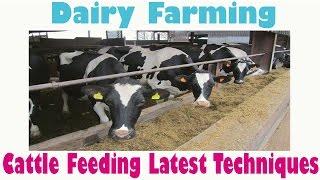 Milk Dairy Farming Latest Feeding Techniques -(2016) | Milk Dairy Farming In India
