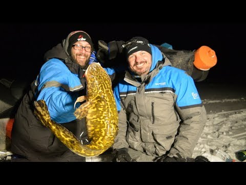 Ice Fishing GIANT Eelpout In Minnesota / How To Catch