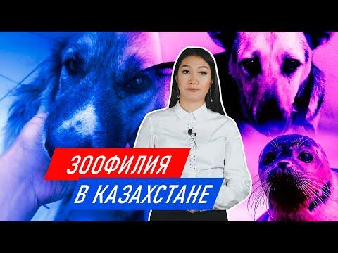 Как защитить животных в Казахстане от неоправданного насилия//Разбор Аиды Байтемировой